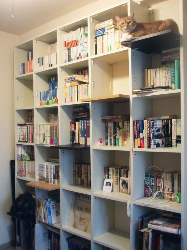 猫が登れる本棚 -本棚を探しているのですが、あえ …